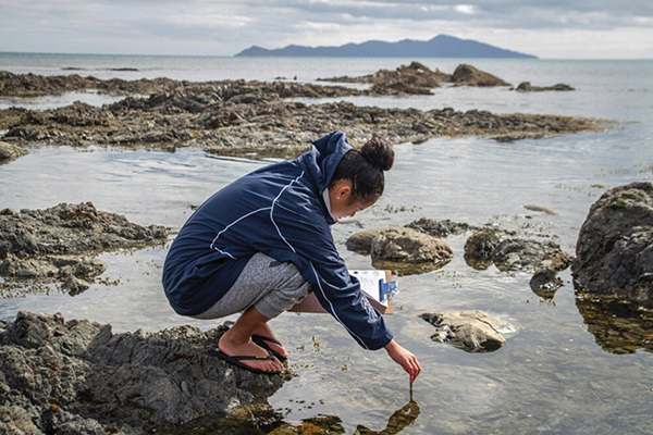 Te Kura Moana learning experiences have included exploring coastal wildlife.